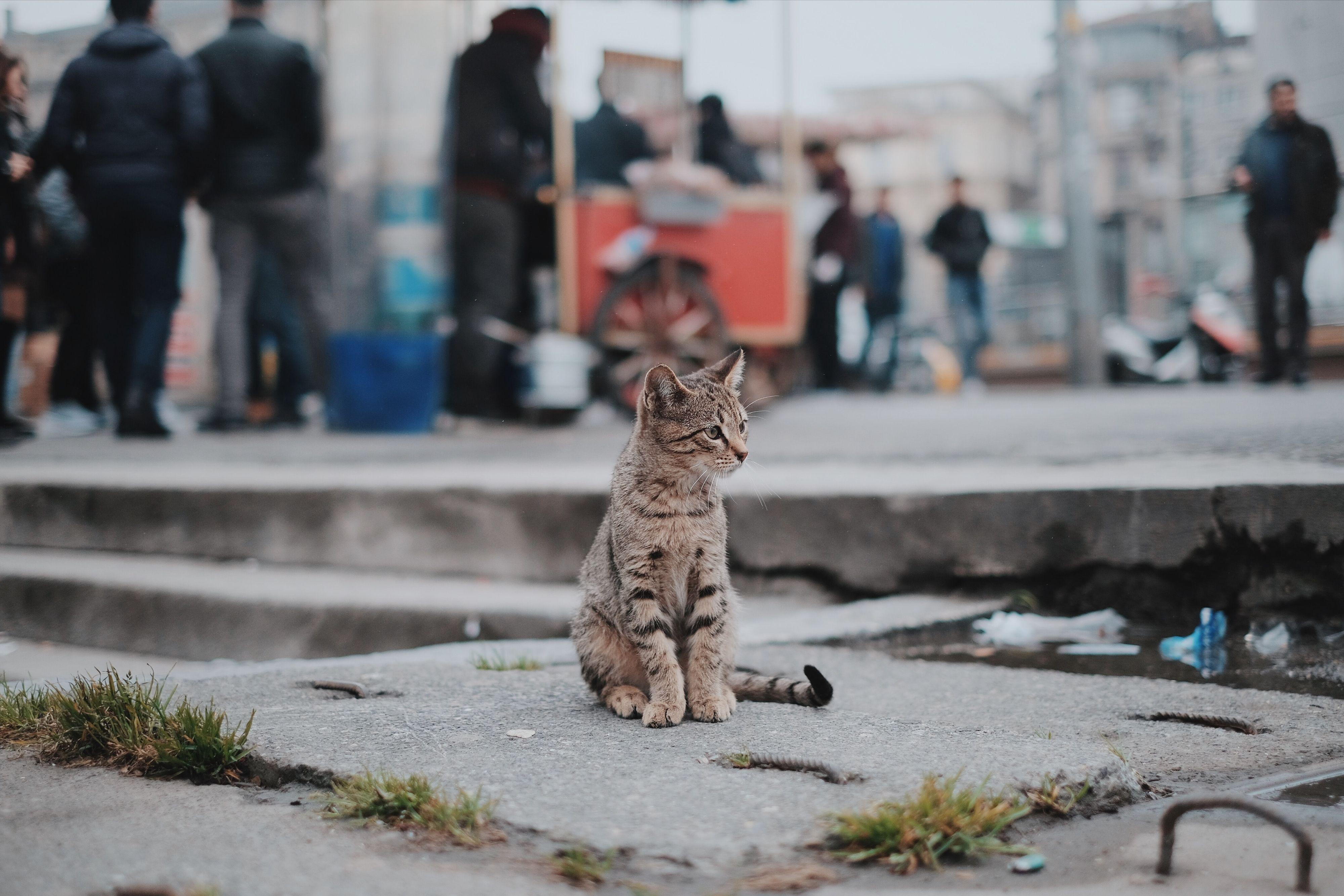 Мамба предлагает скинуться на корм для бездомных котов