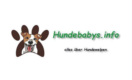 Добавить пресс-релиз на сайт Hundebabys.info