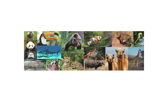 Animales1.Com